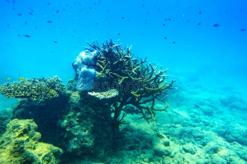 Onderwaterscène met koraalrif en vissen, Overzees stock fotografie
