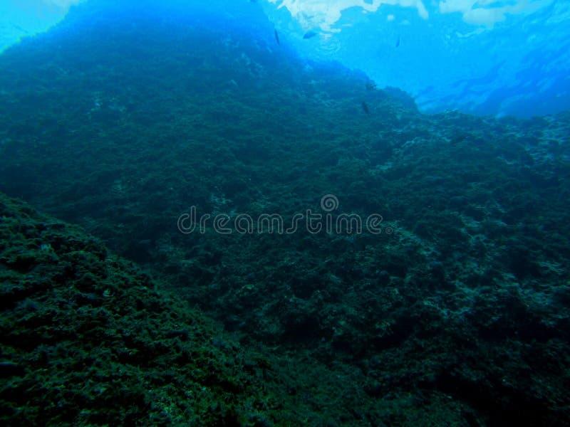 Onderwaterschat 1 stock foto
