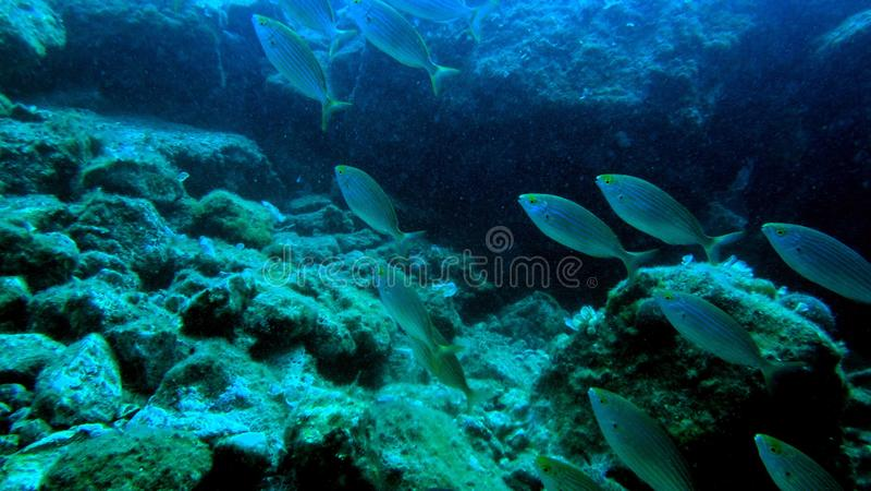 Onderwaterschat 1 stock foto's