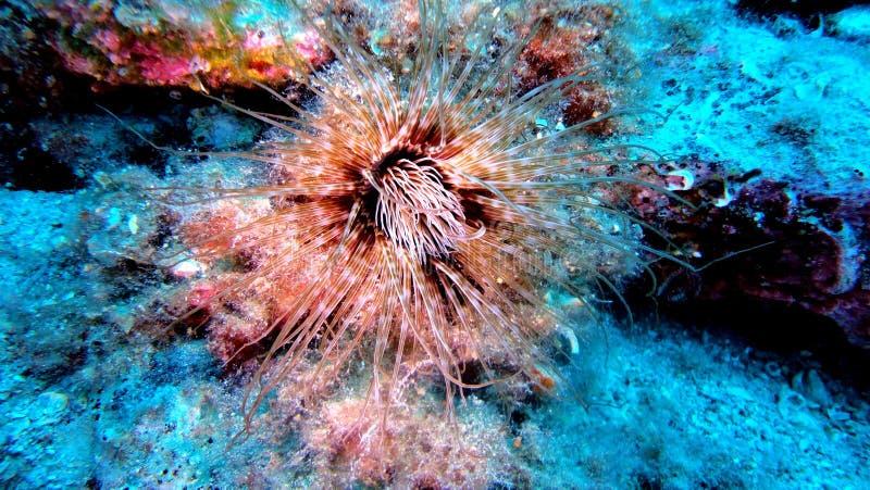 Onderwaterschat 1 stock afbeeldingen