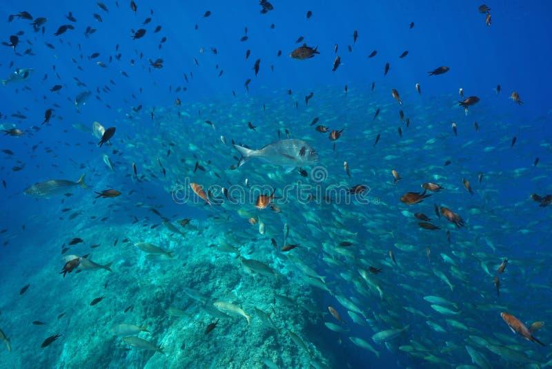 Onderwaterschool van vissen Middellandse Zee Frankrijk stock foto