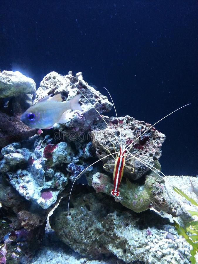 Onderwaterschoonheid royalty-vrije stock fotografie