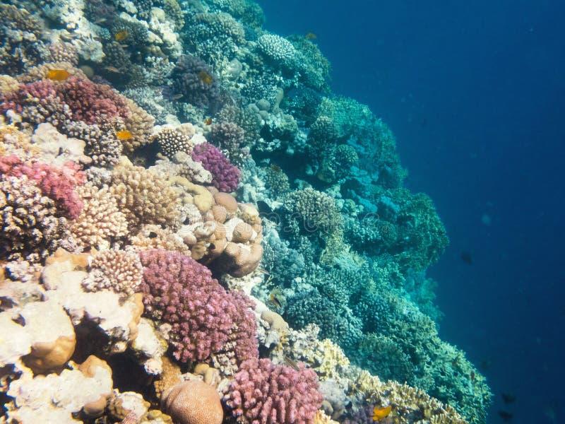 Onderwaterschot van een koraalrif in het Rode Overzees royalty-vrije stock afbeeldingen