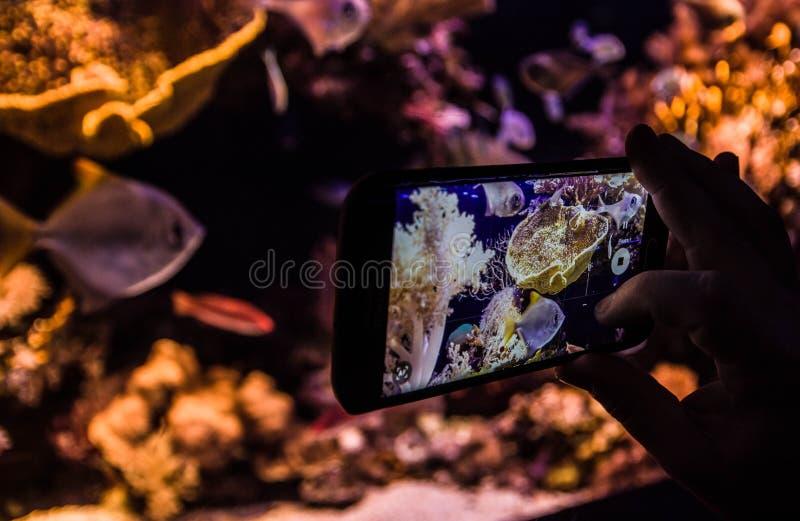 Onderwaterwaarnemingscentrum royalty-vrije stock afbeelding