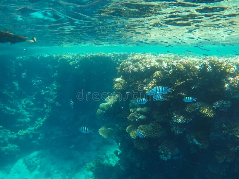 Onderwaterwereld van het Rode Overzees in Egypte royalty-vrije stock foto's