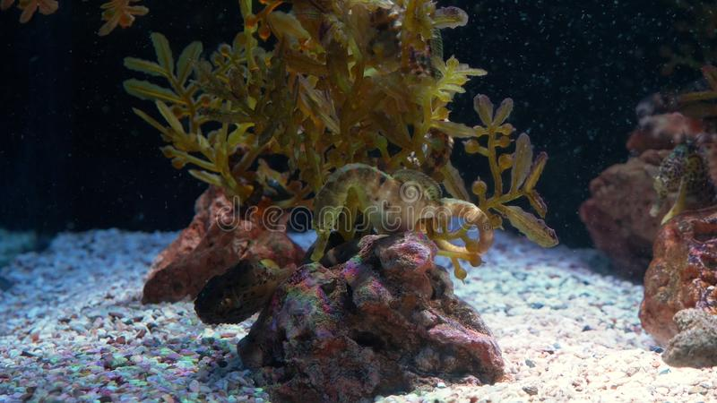 Onderwaterwereld, vele multi-colored vissenkoraalriffen seahorses stock fotografie