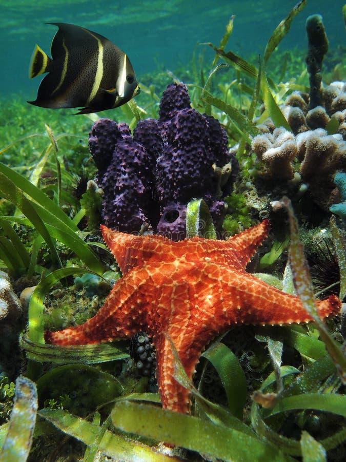 Onderwaterzeester met spons en een zeeëngel stock foto's