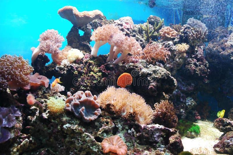 Onderzees stock afbeeldingen