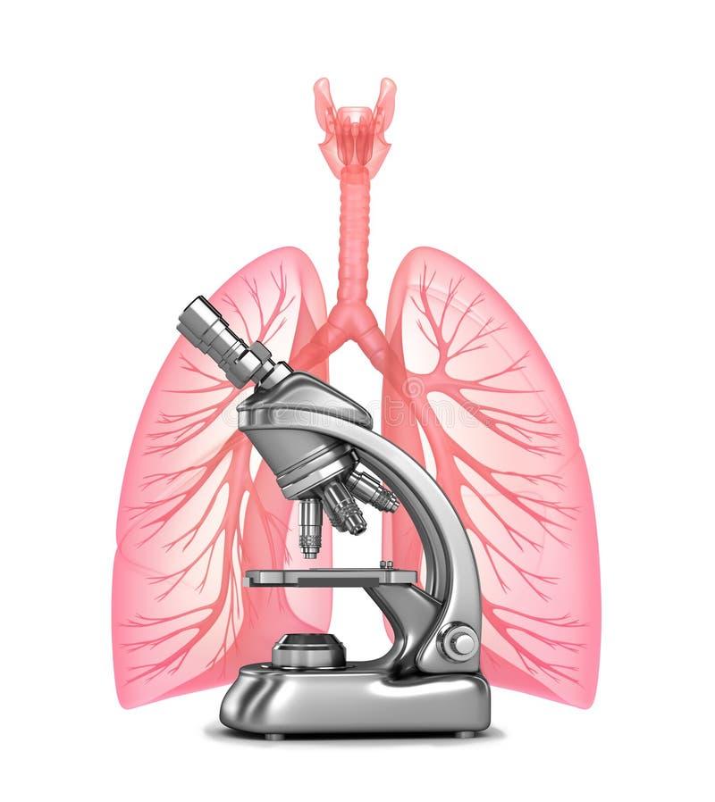 Onderzoek van menselijke longen met en bronchiën stock illustratie