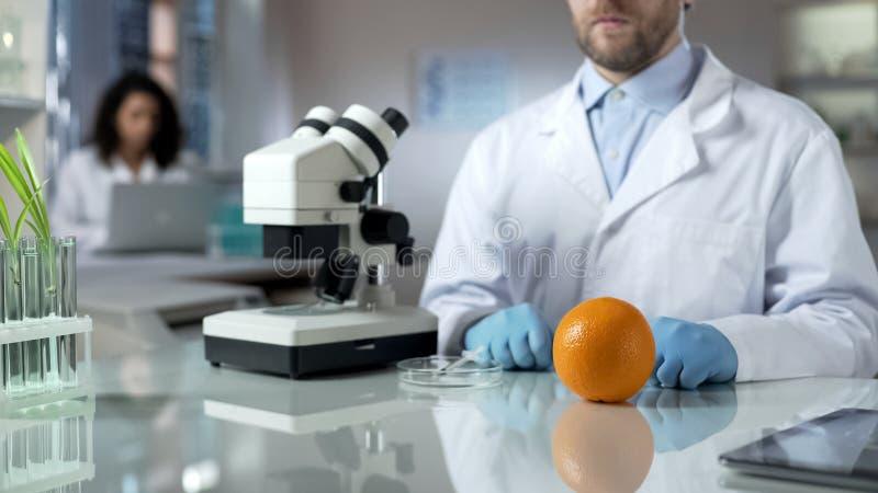 Onderzoeker die oranje steekproef in laboratorium, genetisch gewijzigd voedsel analyseren royalty-vrije stock afbeelding