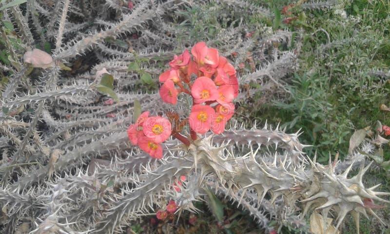 onderzoekshappyness binnen uw verdriet! enkel als deze bloem! royalty-vrije stock fotografie