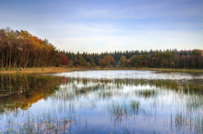 Ondiep meer en omringend bos stock foto's