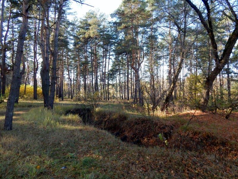 Ondiep ravijn in het bos stock foto's
