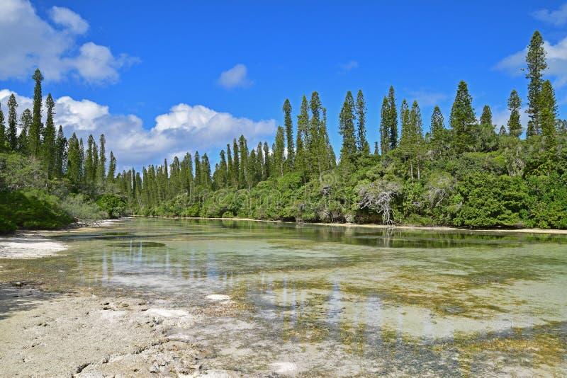 Ondiepe brakke rivierstroom die naar Natuurlijke Pool in Ile des Pins, Nieuw-Caledonië stromen royalty-vrije stock fotografie