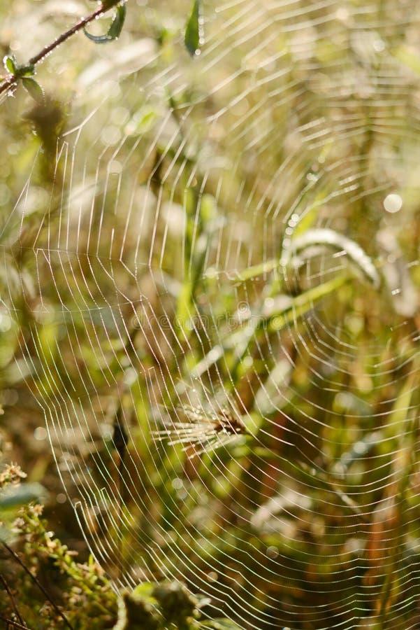 Ondiepe Diepte van Gebied Vage de herfstachtergrond De herfstinstallaties Fluweelseizoen Wild gebied van gras op zonsondergang, z royalty-vrije stock fotografie
