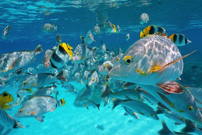Ondiepte van tropische vissen onderwater dicht bij oppervlakte stock foto