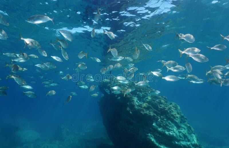 Ondiepte van vissen Middellandse Zee Sicilië Italië royalty-vrije stock fotografie