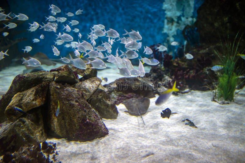 Ondieptevissen in het blauwe water royalty-vrije stock foto's