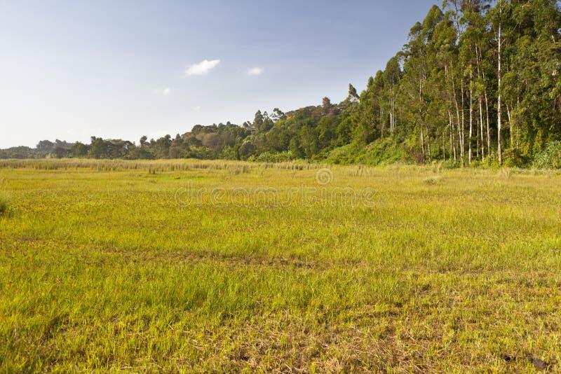 Ondiri-Sumpf im Kikuyu, Kenia stockbild