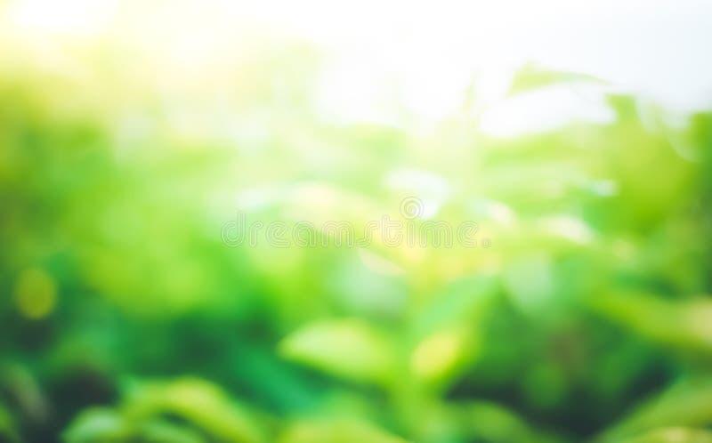 Onduidelijk beeld van dichte omhoog verse groene samenvatting en zonlicht royalty-vrije stock foto