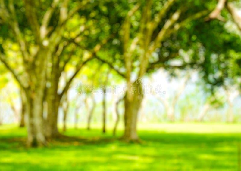Onduidelijk beeldpark met de bokeh lichte achtergrond, aard, tuin, lente en zomer royalty-vrije stock afbeeldingen