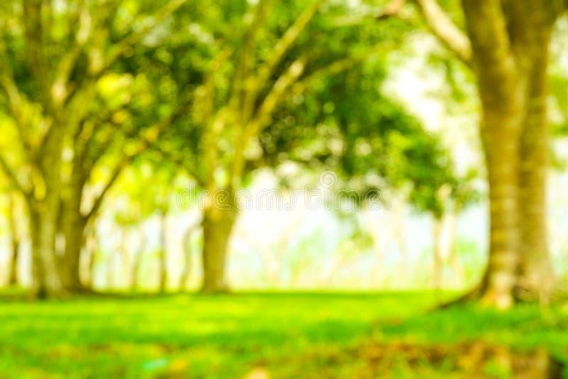 Onduidelijk beeldpark met de bokeh lichte achtergrond, aard, tuin, lente en zomer stock fotografie