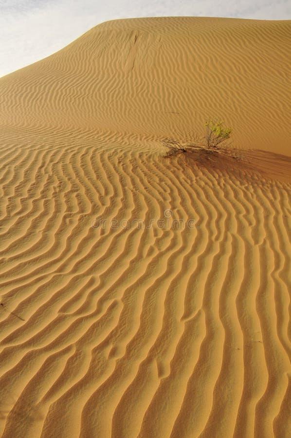 Ondulaciones de la arena de Liwa fotografía de archivo
