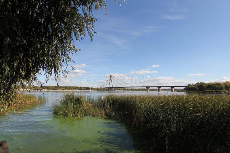 Ondulaciones en el río en el día de verano soleado Cañas y lenteja de agua en el río en la puesta del sol Puente de ejecución sob fotografía de archivo