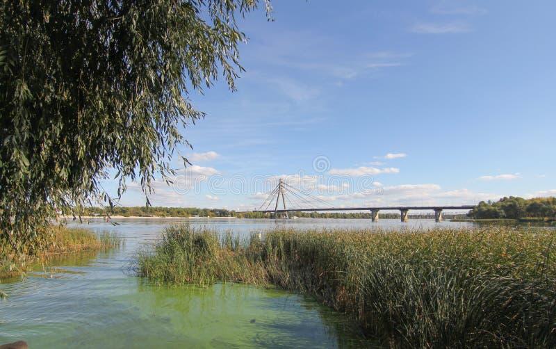Ondulazioni sul fiume al giorno di estate soleggiato Canne e lemma sul fiume al tramonto Ponte di attaccatura sopra il fiume immagini stock libere da diritti
