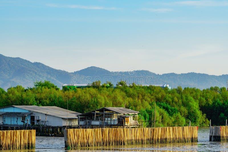 Ondulez la barrière de protection faite à partir des bambous secs à la forêt i de palétuvier photographie stock