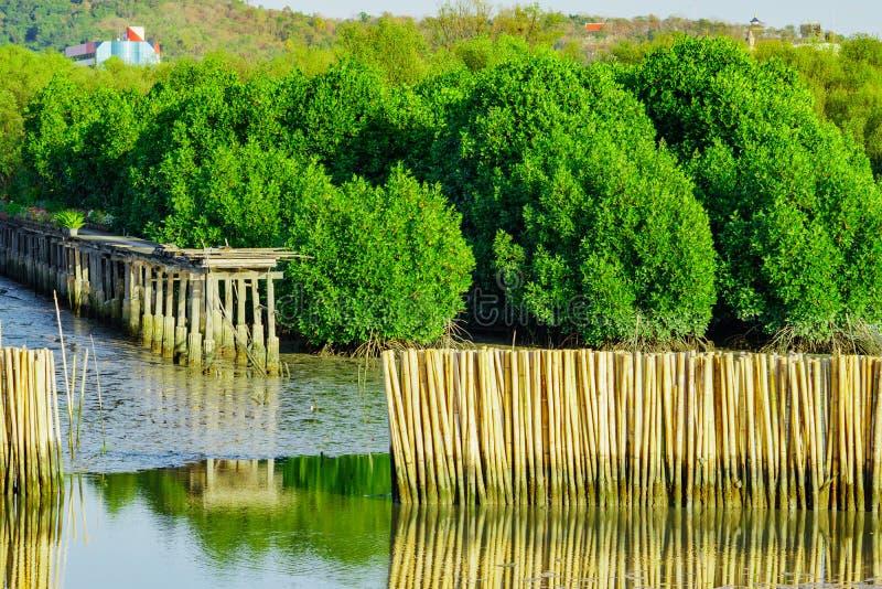Ondulez la barrière de protection faite à partir des bambous secs à la forêt i de palétuvier image libre de droits