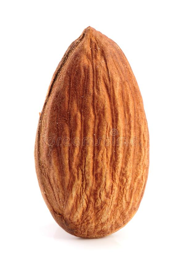 One almond isolated on white background macro.  stock image
