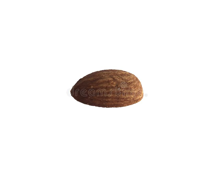 One almond nut on a white background stock images