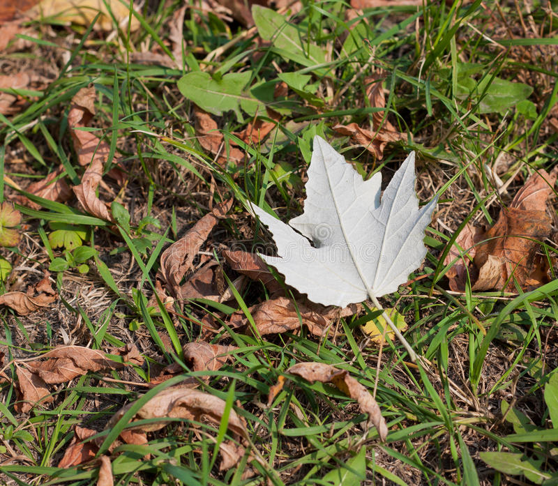 Download One alone white leaf. stock image. Image of outdoor, symbol - 28525377