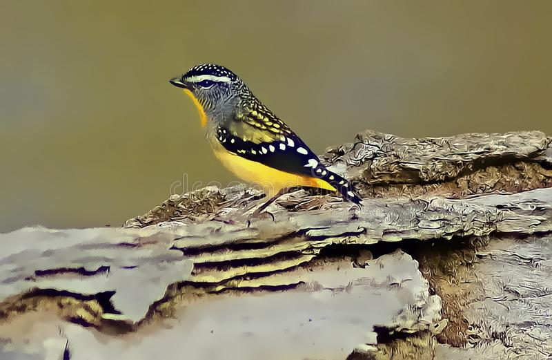 Spotted Pardalotte. One of Australia's smallest birds, the Spotted Pardalote builds its nest in a long horizontal tunnel dug into the soil of creek banks stock images