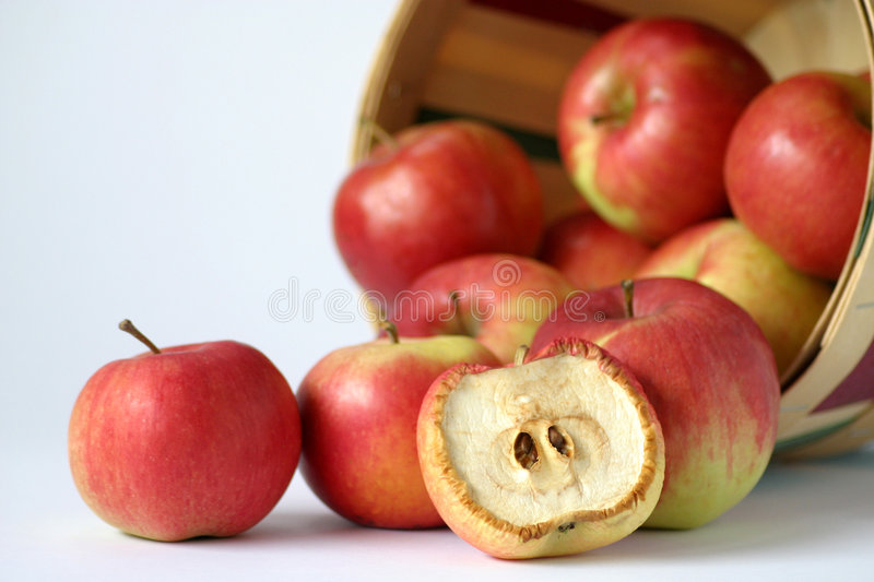 One Bad Apple Spoils the Bunch. Just like the old saying... it takes one bad apple to spoil the bunch. While the rest of the apples are as they should be, red royalty free stock image