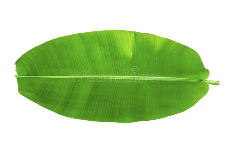 One banana leaf on isolate and white background and clipping path royalty free stock photos