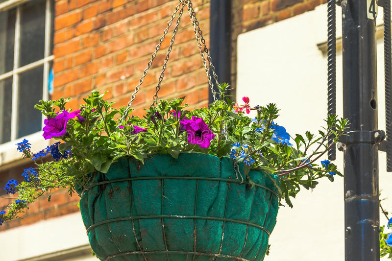 One basket of flowers on a lamp post in Windsor town. One basket of flowers on a lamp post in the Windsor town, UK royalty free stock images