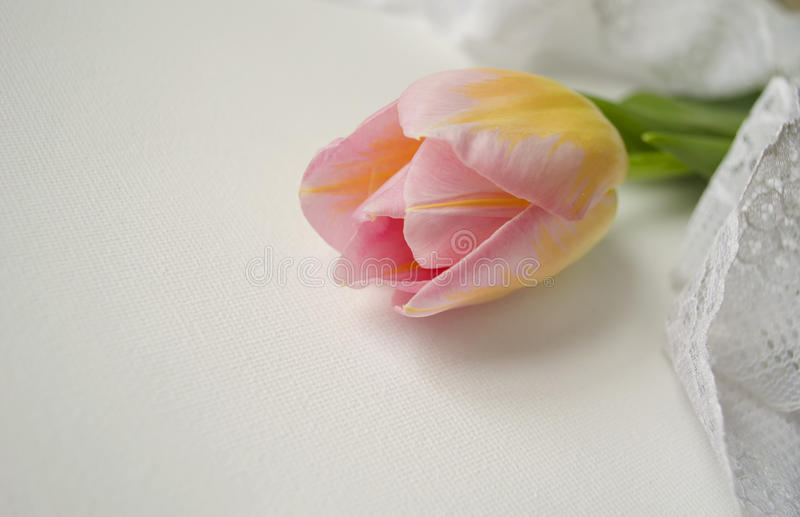 One beautiful tender pink tulip with lacy napkin on white background with place for text. stock images