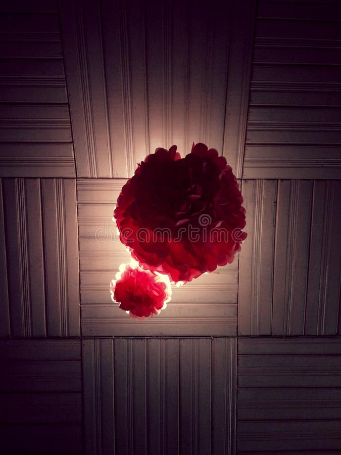 Floating flower with perfect lighting stock image