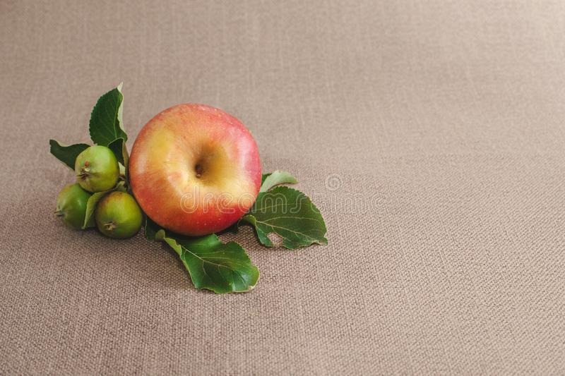 one big red apple and three unripe green apples on the sack royalty free stock photo