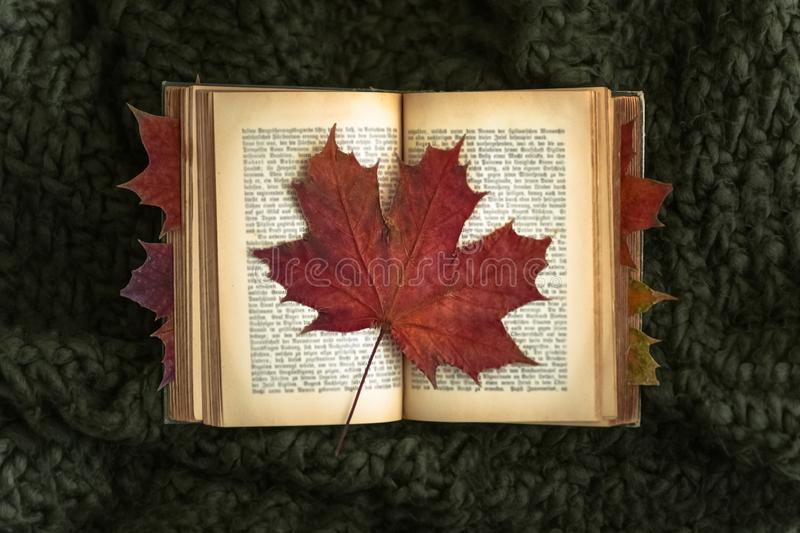 Red leaf on old book stock images