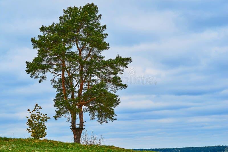 One big tree against a clear sky stock photos