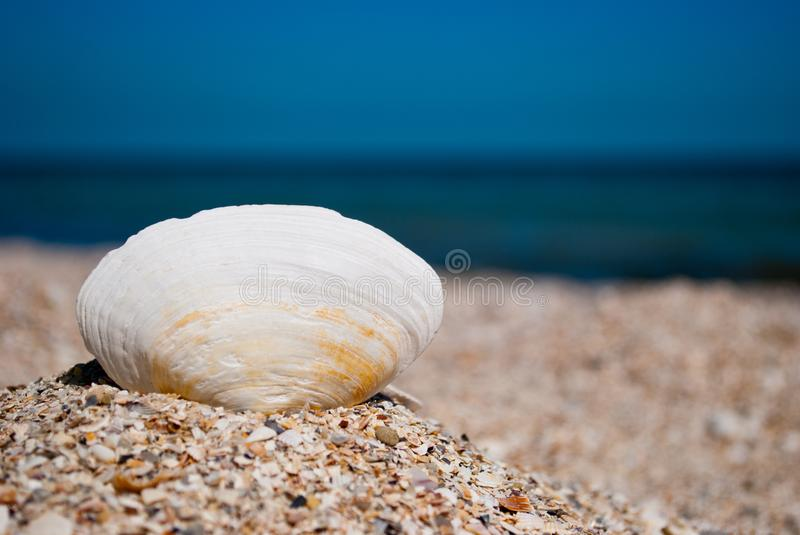 Big white beautiful oval shell on the left against a blue sea beach sand beach summer sunny day royalty free stock photo