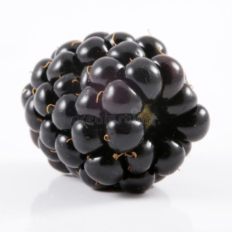 Download One blackberry stock photo. Image of isolated, freshness - 25707522