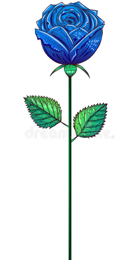 One blue bud rose on a stem. Drawing, isolated on white royalty free illustration