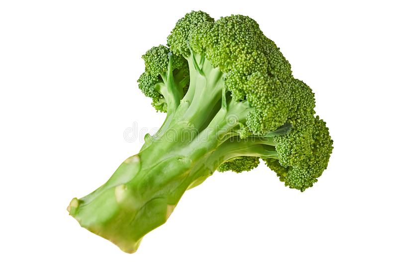 One branch of fresh green broccoli isolated on white background without shadow. Top view stock images