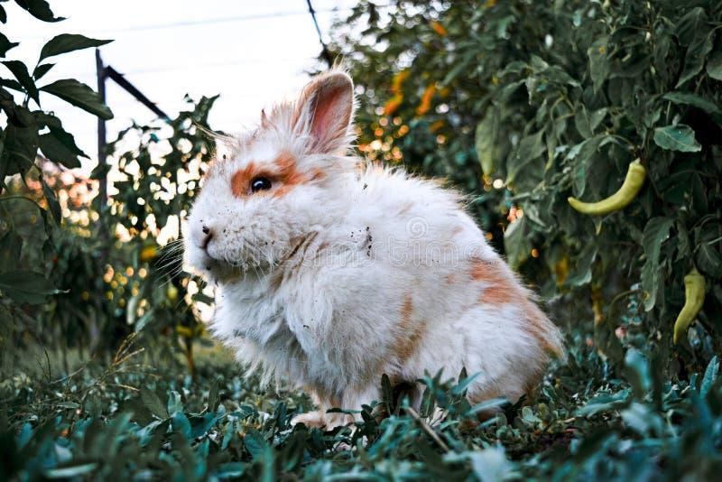 One brown baby rabbit in garden stock photo