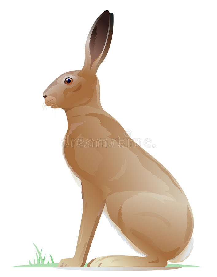 One Brown Hare. One big brown adult hare sitting on the ground on side view, realistic wild animal illustration on white background vector illustration