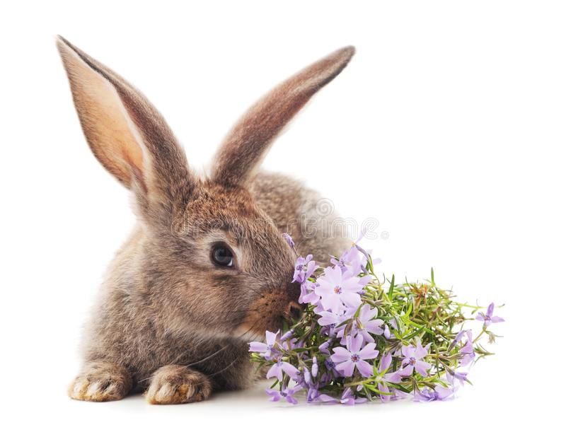 Brown rabbit with flowers royalty free stock image